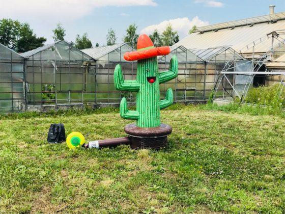 Wurfring Kaktus Eventspiel mieten