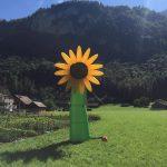 Skydancer Sonnenblume mieten